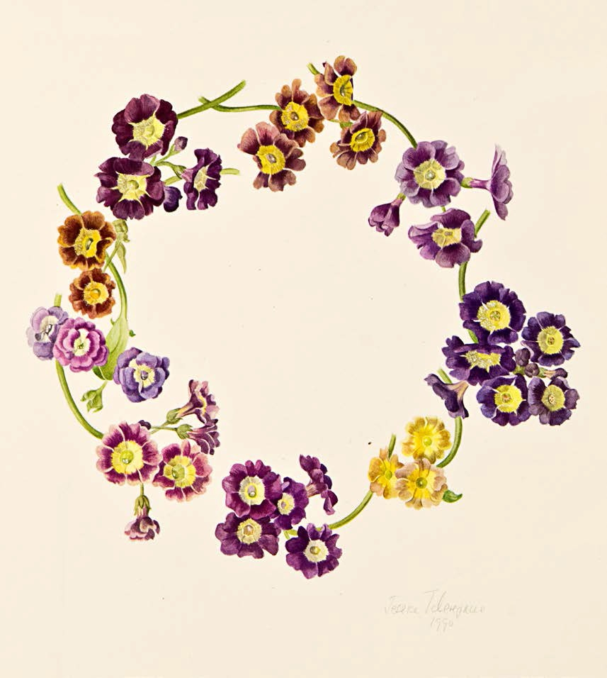 Jessica Tcherepnine created this wreath of favourite ariculas for me.