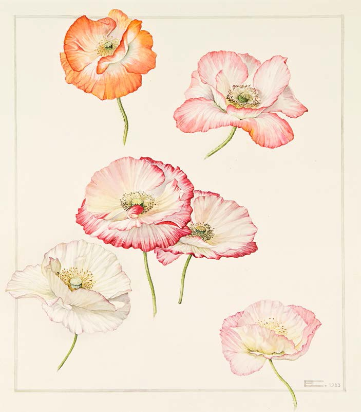 Poppies, Elizabeth Cameron, 1983.